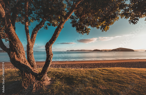 Poster Nieuw Zeeland Sunrise in New Zealand Paihia Beach