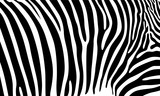 Fototapeta Zebra - Realistic abstract zebra skin pattern vector illustration