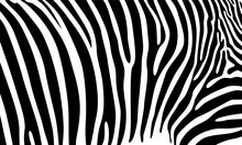 Realistic Abstract Zebra Skin ...