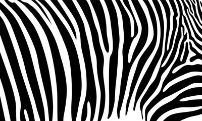 FototapetaRealistic abstract zebra skin pattern vector illustration