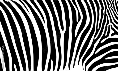 Realistic abstract zebra skin pattern vector illustration - 166647207