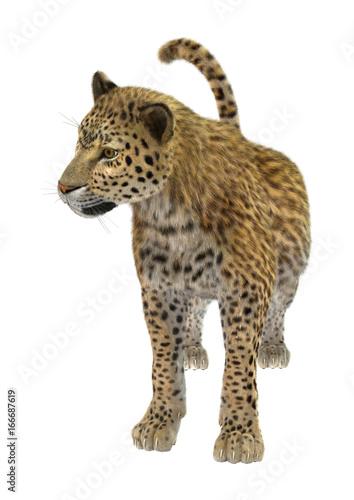 Papiers peints Hyène 3D Rendering Big Cat Leopard on White