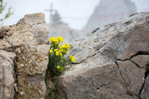 Love To Life Small Yellow Mountain Flowers Grow On Top Of The