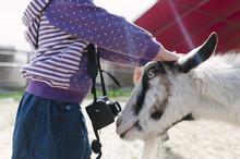 Girl Patting Goat