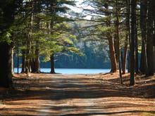 Road, Dirt, Lake, Trees, Path,...