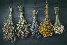 Hanging Bunches Of Medicinal H...
