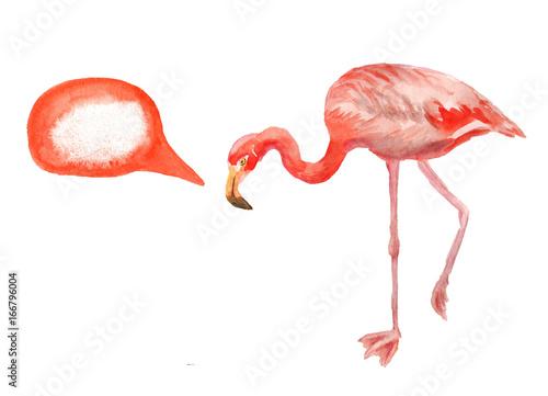 Canvas Prints Flamingo Bird Pink flamingo