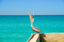 Pelican Stands On A Pier With ...