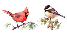 Northern Cardinal And Chickadee Two Birds Watercolor Hand Painted Illustration Set Isolated On White Background