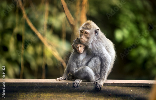 Spoed Foto op Canvas Aap Mother and child monkey