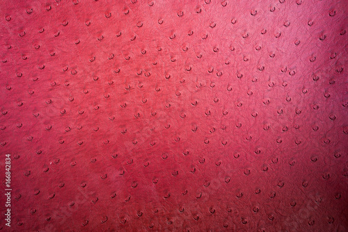 Deurstickers Struisvogel background textured of ostrich leather