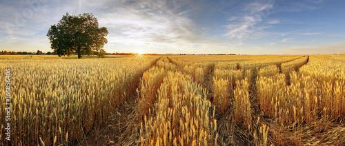 Foto auf Gartenposter Landschappen Rural landscape with wheat field on sunset