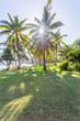 plage de Grand Anse, île de la Réunion