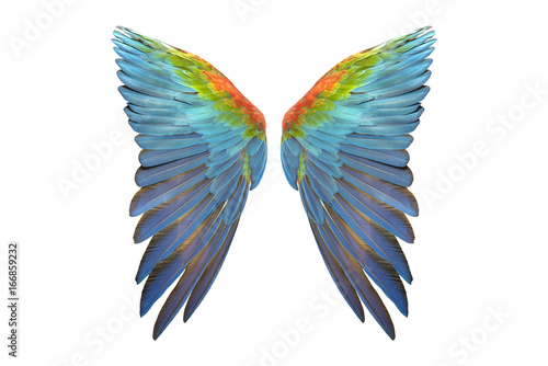 Foto  wing of macaw isolated on white background