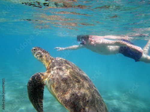 Foto op Canvas Schildpad swimming with a turtle