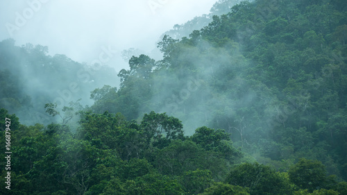 The mist over rainforest