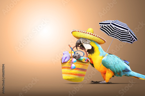 Foto op Aluminium Papegaai Papagei als Paradiesvogel am Strand - Urlaub Konzept