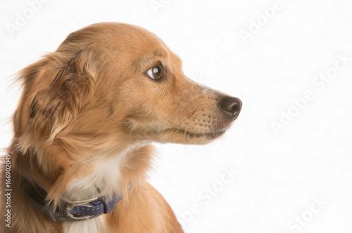 Tuinposter Eekhoorn Dog in studio