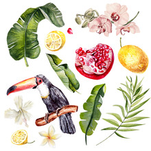 Watercolor Set With Tropical Leaves, Flowers And Birds Tukan. Illustration