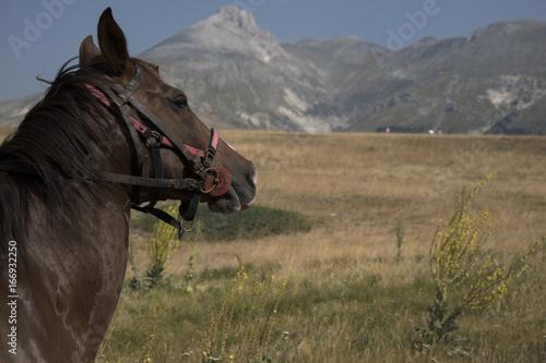 Fototapeta  cavallo in montagna