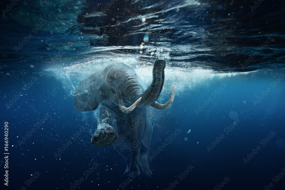 Fototapeta Swimming African Elephant Underwater. Big elephant in ocean with air bubbles and reflections on water surface.