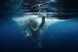Fototapeta Zwierzęta - Swimming African Elephant Underwater. Big elephant in ocean with air bubbles and reflections on water surface.