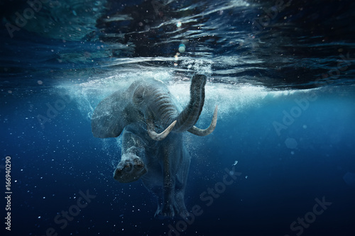 Foto op Plexiglas Olifant Swimming African Elephant Underwater. Big elephant in ocean with air bubbles and reflections on water surface.