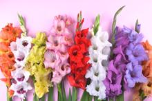 Beautiful Gladiolus Flowers On...