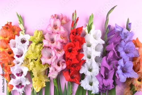 Fotografía Beautiful gladiolus flowers on trendy pink background.