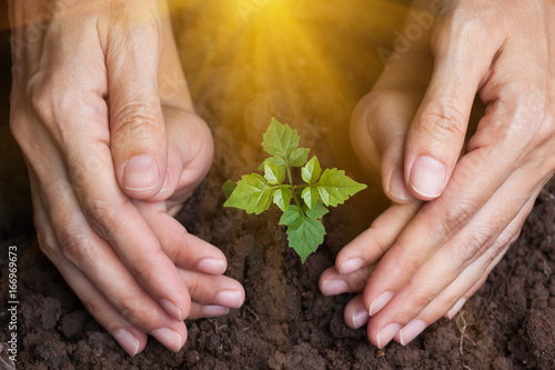 Spoed Foto op Canvas Planten The hands of children and mother protect the plant's young trees.