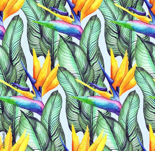 Fotobehang Paradijsvogel bloem 1