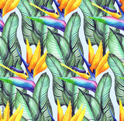 Garden Poster Bird-of-paradise flower 1
