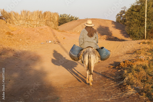 In de dag Egypte Dakhla, Egypt - December 25, 2006: Farmer riding donkey to the fields.