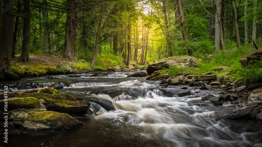 Fototapety, obrazy: Dingman's Creek at George W. Childs State Forest Park in Dingman's Ferry, PA on a sunny summer day