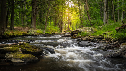 Dingman's Creek at George W. Childs State Forest Park in Dingman's Ferry, PA on a sunny summer day