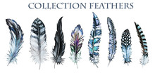 Watercolor Collection Of Feath...