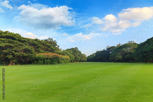 Green grass and trees in beautiful park under the blue sky Slika na platnu
