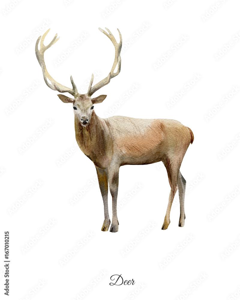 Ręcznie malowane akwarela plakat z jelenia <span>plik: #167010215 | autor: olesyaturchuk</span>