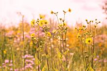 Summer Wildflower Field Of Sunflowers