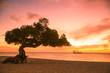 Leinwandbild Motiv Beautiful Aruba sunset with divi divi tree and sailboat in the distance.