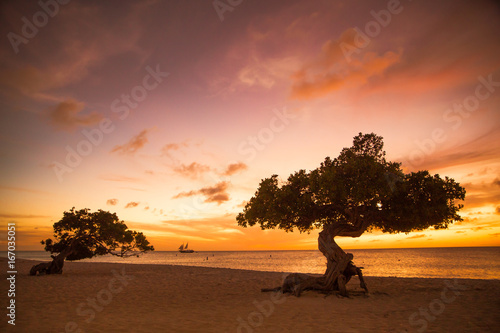 фотография Beautiful Aruba sunset with divi divi trees and sailboat in the distance