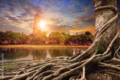 bayan tree and sunset behind asia pagoda
