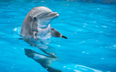 FototapetaBaby Dolphin