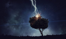 Bright Lightning Hit The Tree