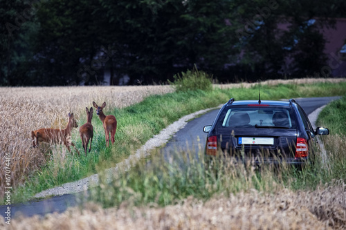 Tuinposter Ree Deer next to a country road