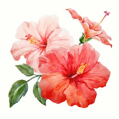 Fototapeta 3D Watercolor tropical hibiscus flower