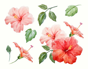 FototapetaWatercolor tropical hibiscus flower