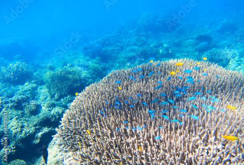 Tuinposter Koraalriffen Tropical nature undersea coral landscape. Coral reef underwater.