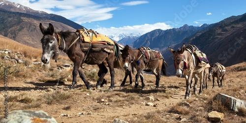 Foto op Aluminium Ezel Caravan of mules in nepalese Himalayas