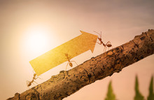 Ants Carry Rising Arrow For Business Graph, Business And Teamwork Concept